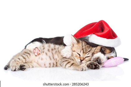 Tiny kitten and basset hound puppy in red santa hat sleeping on a pillow. isolated on white background
