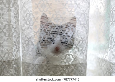 Tiny kitten hiding behind white lace curtains. Selective focus.