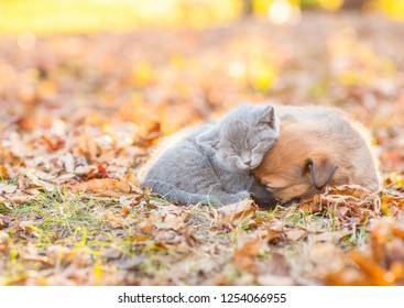 Tiny kitten and mongrel puppy sleep together on autumn leaves at sunset. Empty space for text