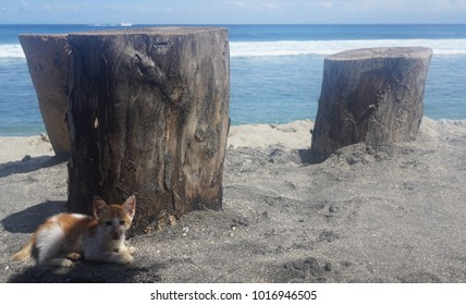 Tiny kitten on beach in front of ocean view
