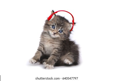 Tiny Kitten on a White Background Listening to Music