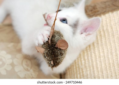 Tiny kitten playing with toy mouse