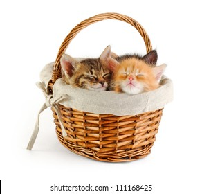 tiny kittens sleeping in basket, isolated on white