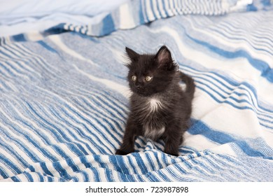 Tiny Little Kitten Playing on Bed