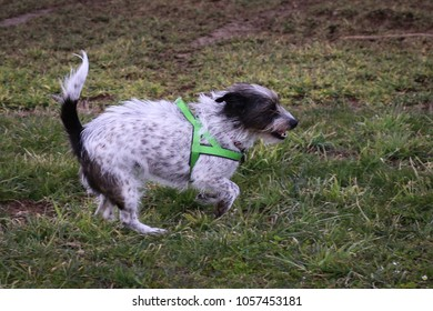 Tiny Mix-Breed dog outdoors