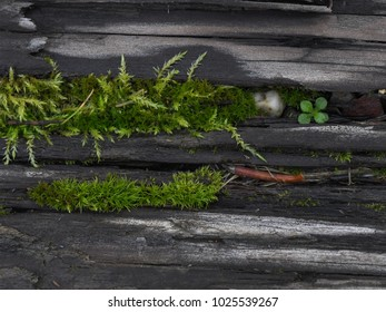 Tiny Moss World