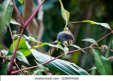 A tiny mouse sits in a vegetable garden on a plant.