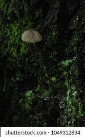 Tiny mushroom growing on the inside of a tree covered in fluorescent moss and lichens. Dark space in the cave or tree filled with growing plants. White toxic shroom and green leaves. Outdoors nature.