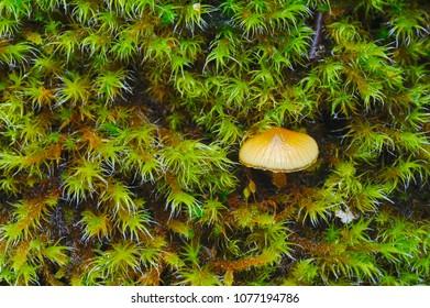 Tiny mushroom and moss closeup after a rainfall.