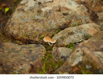 Tiny mushrooms born amidst the stones on the wet soil