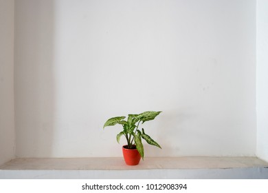 tiny orange pot
