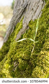 Tiny plant on a tree trunk covered with moss