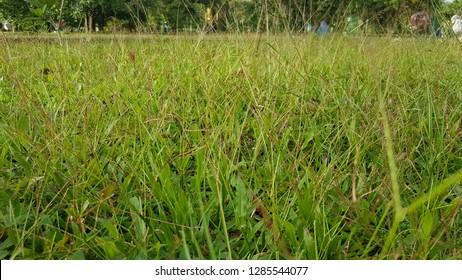 TINY PLANT PARK