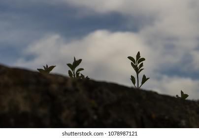 Tiny plants reaching towards sky from the stone wall