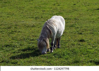 Tiny pony in the meadow