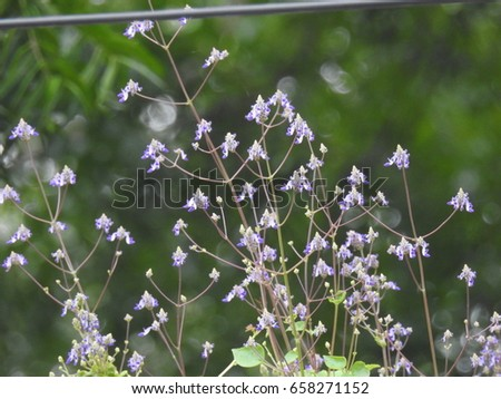 Tiny purple flowers on plant branches stock photo edit now tiny purple flowers on plant branches little purple flowers grass flowers mightylinksfo