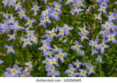 Tiny purple flowers with yellow centers coat the sides of the mountains in North Carolina