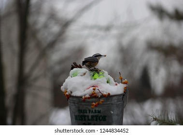Tiny red breasted nuthatch holding a seed in it's beak while standing on top of a bucket filled with Christmas bulbs covered with snow and bittersweet berrie.