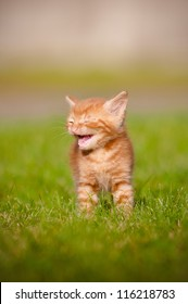 tiny red kitten meowing outdoors