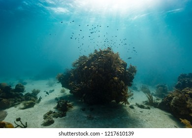 Tiny silver fish dance in the sun's rays above a small coral colony