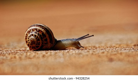 A tiny snail walking by