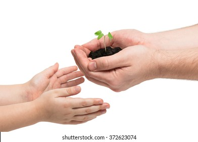 Tiny sprout of morning glory in man's hands. The man gives it to his baby. Earth day.