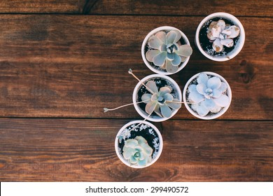 tiny succulents in white ceramic pots on wooden table background