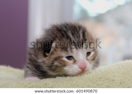 Tiny tabby images 89