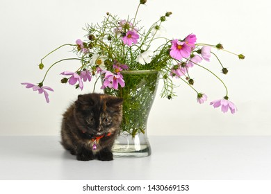 Tiny tortoiseshell colored long-haired kitten sits near bouquet of pink flowers in glass vase.