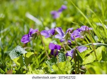 Tiny Violet Blossoms