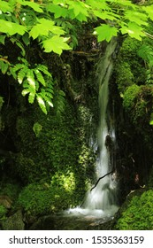 Tiny waterfall on a creek flowing into the McKenzie River, Oregon
