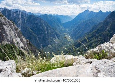 Tiny white alpine flowers and vegetation, overlooking the narrow Trenta valley below, with steep mountains of Julian Alps, Slovenia, on both sides of the valley