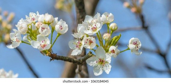 Tiny white flowers blooming on tree-bridal