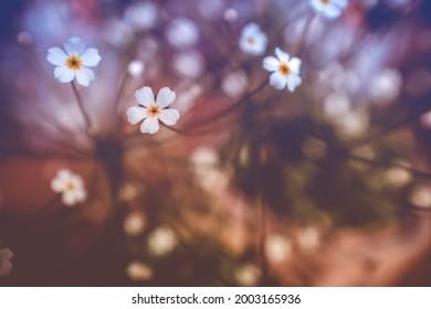 winzige weiße Blumen im Garten