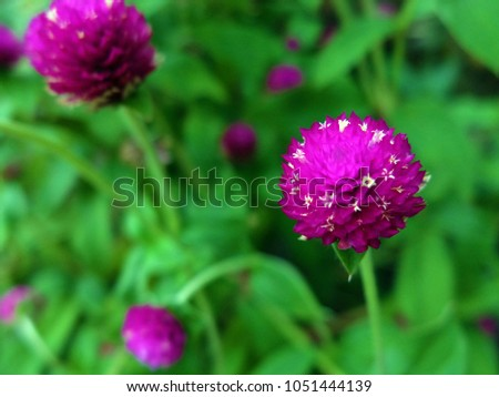 Tiny White Flowers On Big Round Stock Photo Edit Now 1051444139