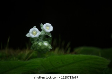 tiny white flowers on green mos in the tropical forest near waterfall, macro style for nature concept