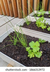 Tiny white planter boxes filled with culinary herbs including chives, parsley and sweet basil.