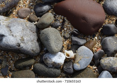 A tiny white shell in the rocks