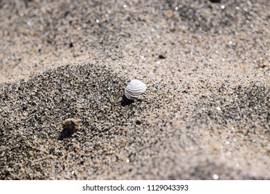 Tiny white shell in the sand at Kern River wilderness, Bakersfield, CA.