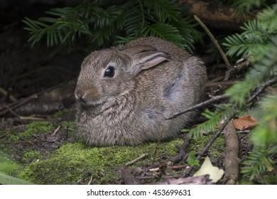 Tiny wild rabbit in park