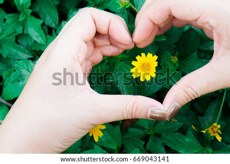 Tiny Yellow Flower Love Heart Shaped Stock Photo Edit Now