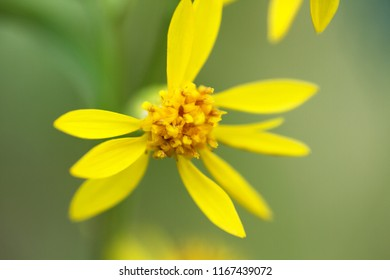 Tundra flower images stock photos vectors shutterstock a tiny yellow flower with stamens full of pollen window into world of ultra macro mightylinksfo