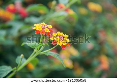 Tiny yellow red flowers over background stock photo edit now tiny yellow and red flowers over a background full of green leaves in hanga roa downtown mightylinksfo