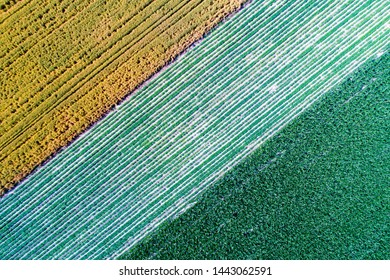 Tio view of agricultural parcels with diferent crops in summer time shoot from drone