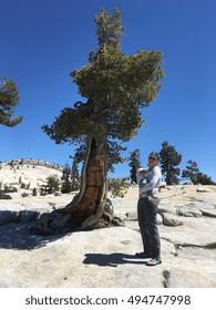 Tioga pass, Yosemite, USA