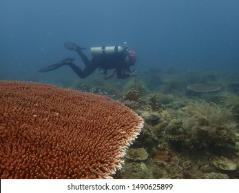 Tioman island, Malaysia - June 20, 2019: A diver diving around coral reef area at Tioman island, malaysia