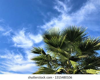 The tip of palm leaves against blue sky and clouds on the background, Winter in Florida USA.