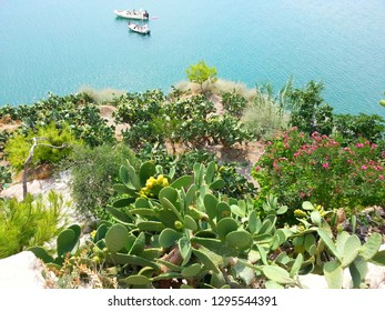Tipical vegetation of Mediterranean sea. The green fig and the colorful flawers create a play of light with the blue of the sea