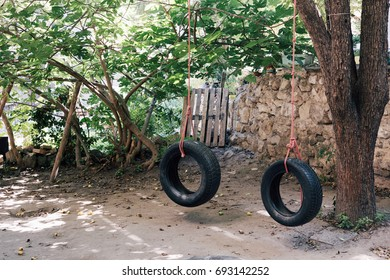 Tire swing hang over the tree with the rope