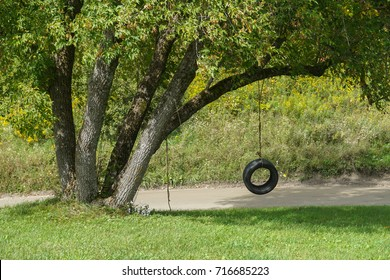 Tire Swing on Tree